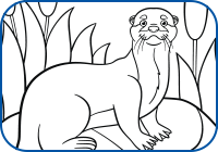 Otter 2 Coloring Page Preview
